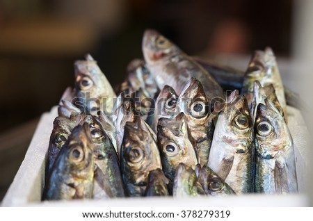 Fresh raw red snapper and mackerel fish in market. Sicilian street market. Maltese market. Fresh fish closeup with blurry background - stock photo