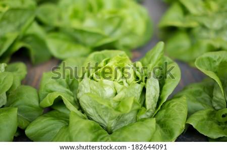 fresh raw salad in Chiangmail Thailand. - stock photo