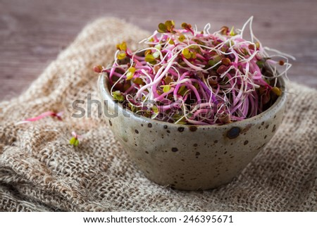 Fresh raw soy germs on a wooden background - stock photo