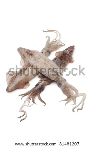 Fresh raw squid on white background