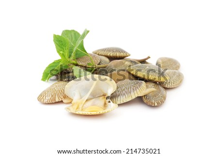 ... raw surf clams with sweet basil leaf on white background - stock photo