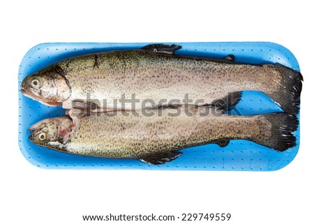 Fresh raw trout isolated on white background - stock photo