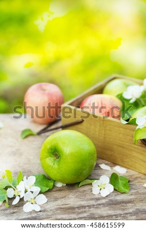 Fresh red and green apples with flowers in the sunny garden