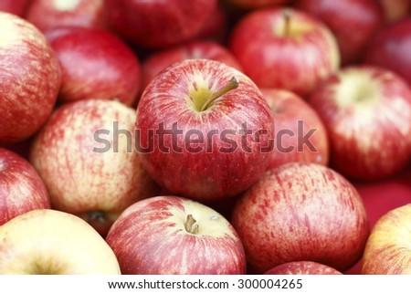fresh red apple - stock photo