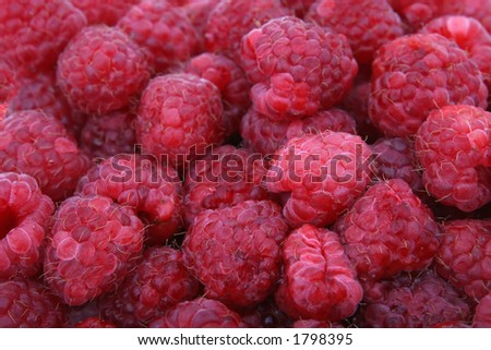 Fresh red breakfash berry fruit, macro closeup, isolated on white, close-up with copyspace - stock photo