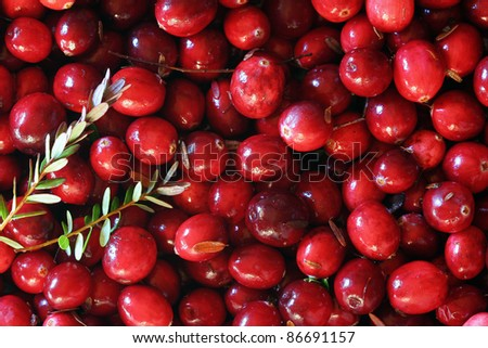 Fresh red cranberries background. With leaves - stock photo