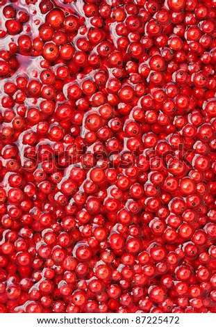 Fresh red currant berries in water - background