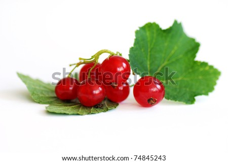 fresh red currant on the white isolated background