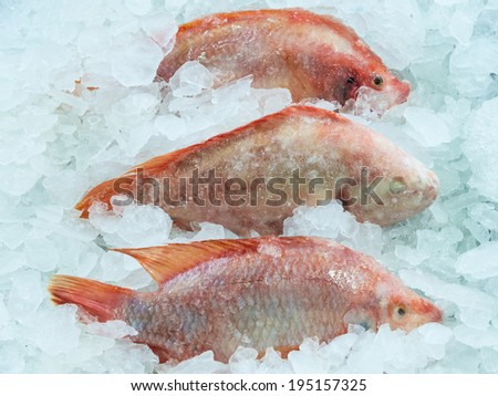 Fresh red fish in the ice tray. - stock photo