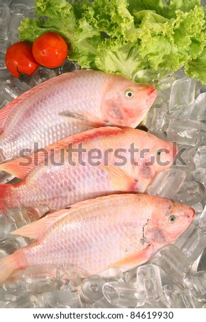 Fresh Red fish on ice - stock photo