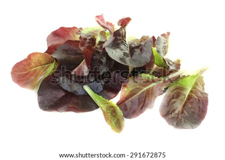fresh red lettuce on a bright background - stock photo