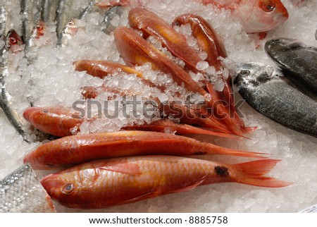 fresh red mullet (goat fish) on ice on fishmonger's slab