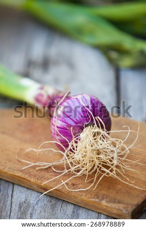 Fresh red onion  on wooden background. Also available in horizontal format. - stock photo