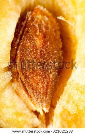 Fresh red plum sliced open to reveal the succulent yellow flesh and pip. - stock photo