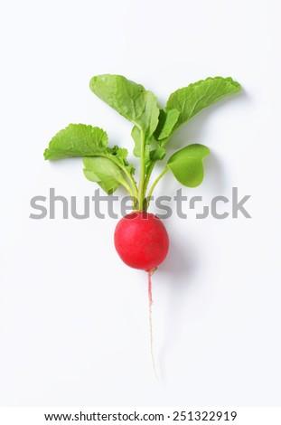 Fresh red radish on white background - stock photo