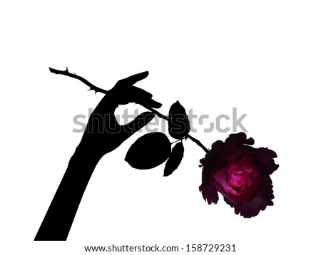 fresh red rose with thorns - stock photo