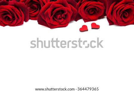 Fresh Red roses on a white background - stock photo