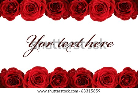 fresh red roses on white background - stock photo