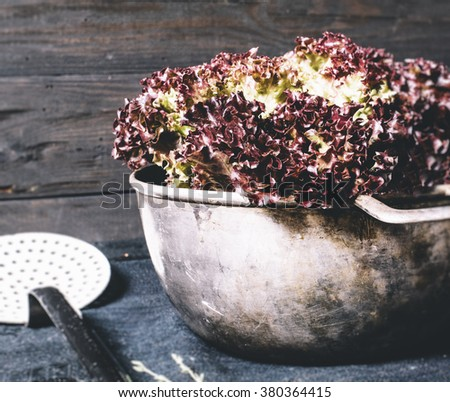 Fresh red salad lettuce leaves isolated on a background on a black textile and metal plate on a dark background of the aged wooden boards vintage horizontal - stock photo