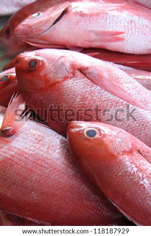 Fresh red snapper for sale in a fish market. - stock photo