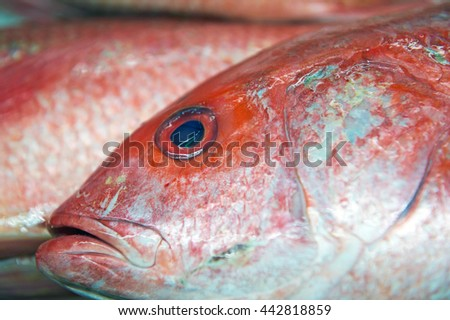 Fresh Red Snapper on Ice - stock photo