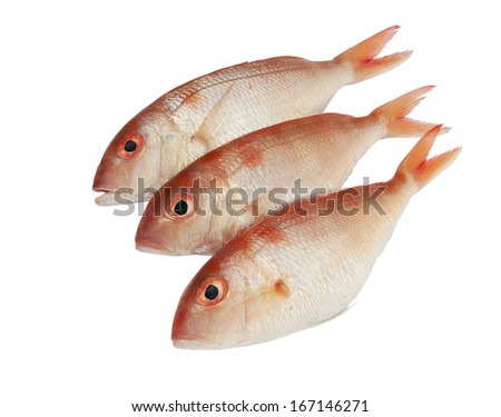 Fresh red snappers isolated on white background  - stock photo