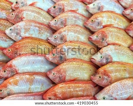 Fresh red tilapia fish or Oreochromis niloticus in market - stock photo