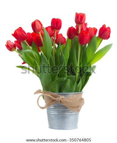 fresh red tulip flowers in metal bucket isolated on white background - stock photo