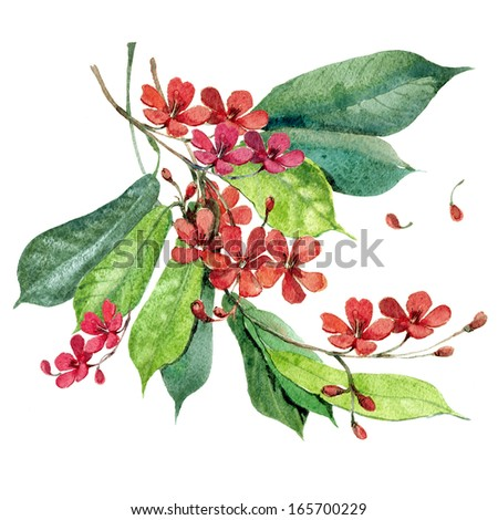 Fresh red watercolor flowers in a classical style on a white background