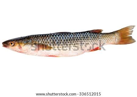Fresh redlip mullet fish isolated on white background - stock photo