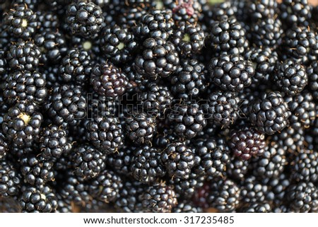 Fresh ripe blackberries. Food background.