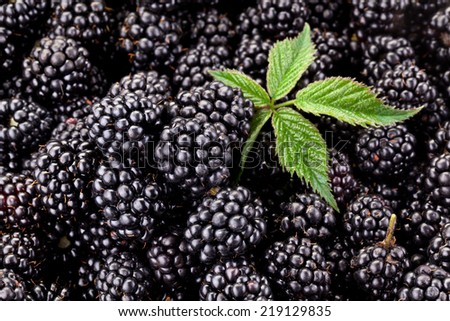 Fresh ripe blackberries with leaf. Food background. - stock photo