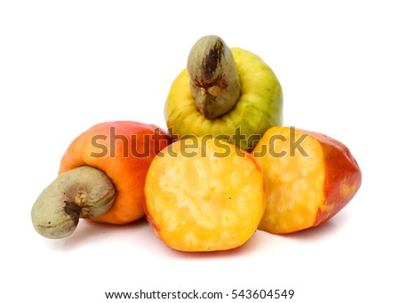 cashew apple stock images, royaltyfree images  vectors, Beautiful flower