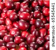 fresh ripe cranberries in closeup - stock photo