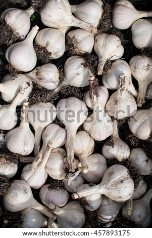 Fresh ripe juicy delicious garlic - stock photo