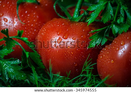 Fresh , ripe , juicy tomatoes on a twig arranged in greens. - stock photo