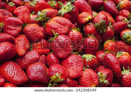 Fresh ripe perfect strawberry - stock photo