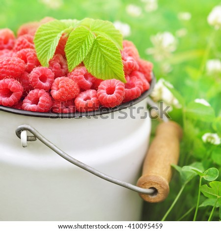 Fresh ripe sweet raspberries on grass and clover background, selective focus - stock photo