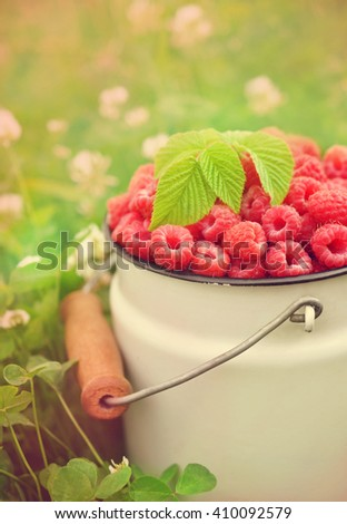 Fresh ripe sweet raspberries on grass and clover background, selective focus, toned - stock photo