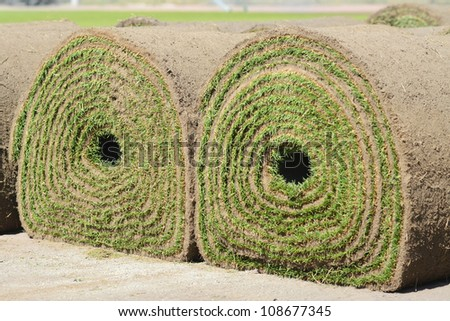 Fresh rolled-up grass turf - stock photo