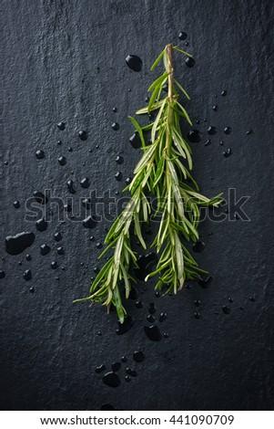 Fresh Rosemary - stock photo