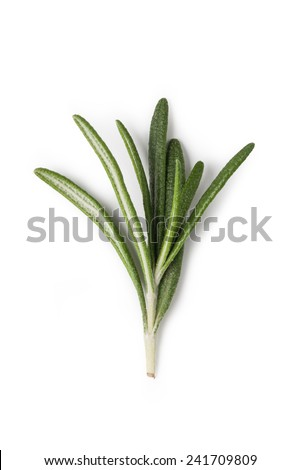 Fresh rosemary herbs isolated on white background - stock photo