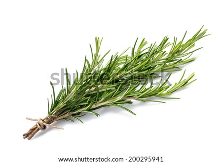 fresh rosemary sprig isolated on white background - stock photo