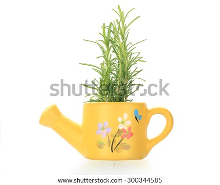 Fresh rosemary sprig leave tree isolated on white background. This has clipping path. - stock photo