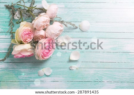 Fresh roses flowers  in ray of light on turquoise painted wooden background. Selective focus. Place for text. - stock photo