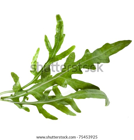 Fresh rucola lettuce  (Arugula), isolated on white - stock photo
