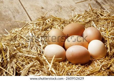 Fresh rural eggs in straw - stock photo
