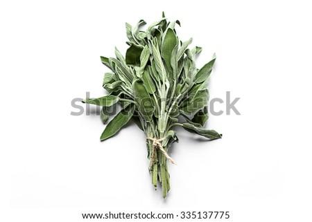 Fresh sage isolated on white - stock photo