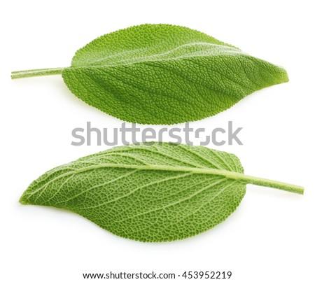 Fresh sage leaves isolated - stock photo