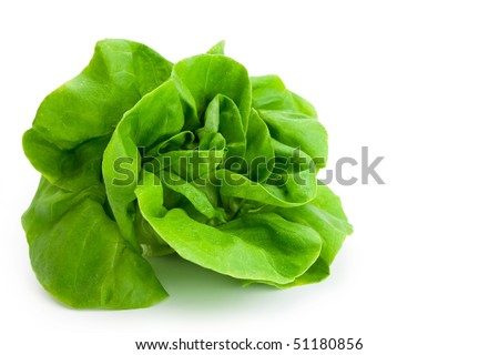 Fresh salad lettuce (also known as butterhead, Boston, Bibb, Buttercrunch, and Tom Thumb, Arctic King) isolated on white - stock photo
